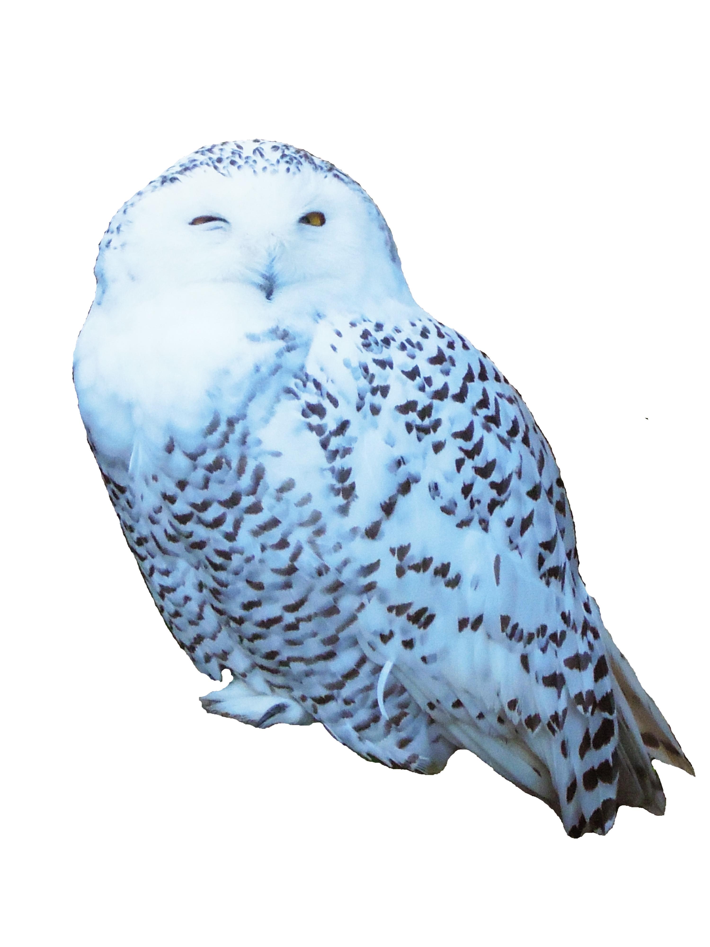 owlowl